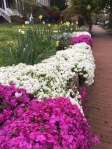 flowers and sidewalk